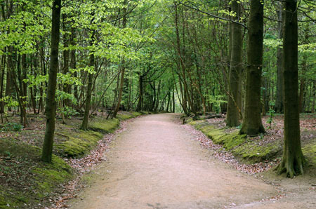 Foret de Soignes