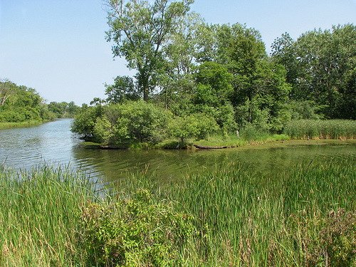 Busse Woods Forest Preserve